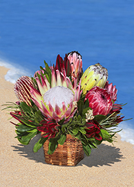 Fall Protea Basket Special